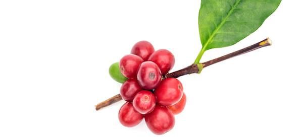 arabica kávé cseresznye