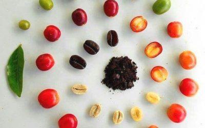 Kávé útja: Hogyan készül a kávé?